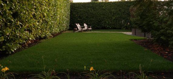 Sod Lawn