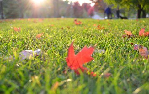 grass-1281561_640